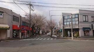 桜h.31.2.jpg